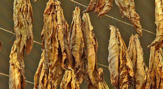El mercado del tabaco
