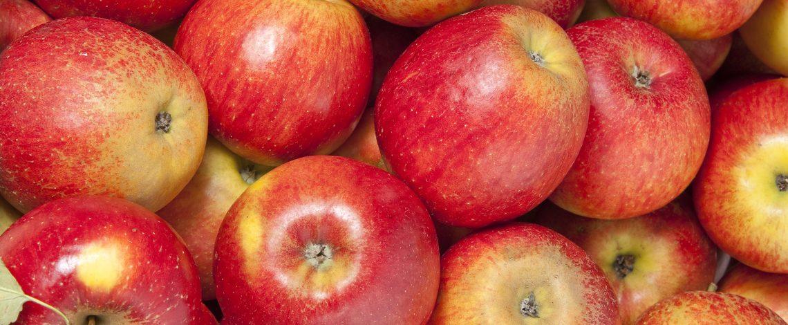 Estudio sobre caracterización de los rasgos productivos, sociales y económicos del mercado laboral vinculado al sector frutícola exportador