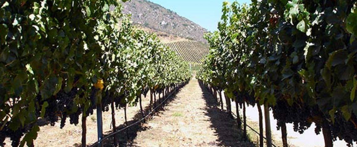 Agricultura y bioenergía