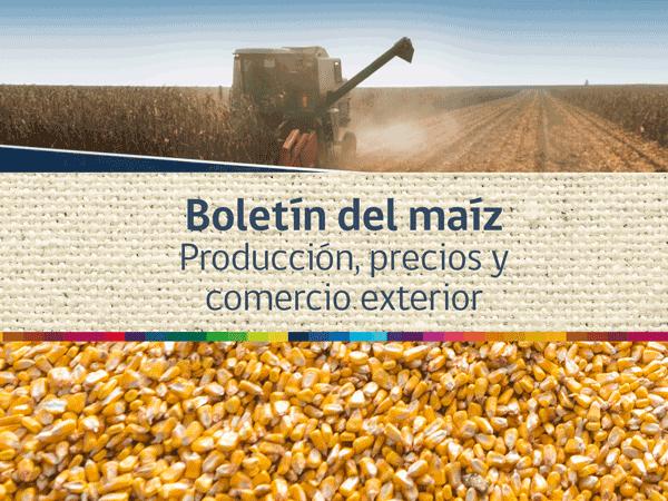 Boletín del maíz