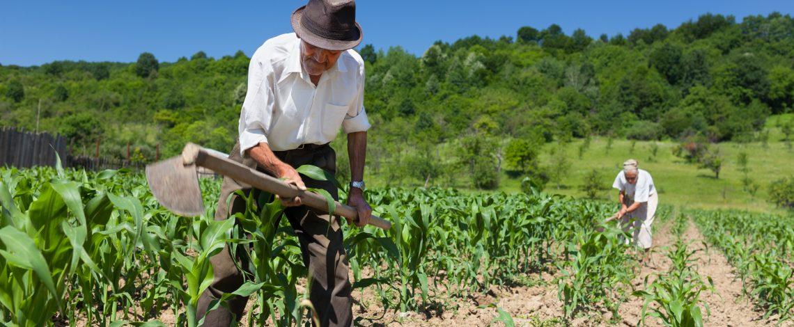 Agricultura Indígena Chilena: información social y productiva de la agricultura según etnia (2011).