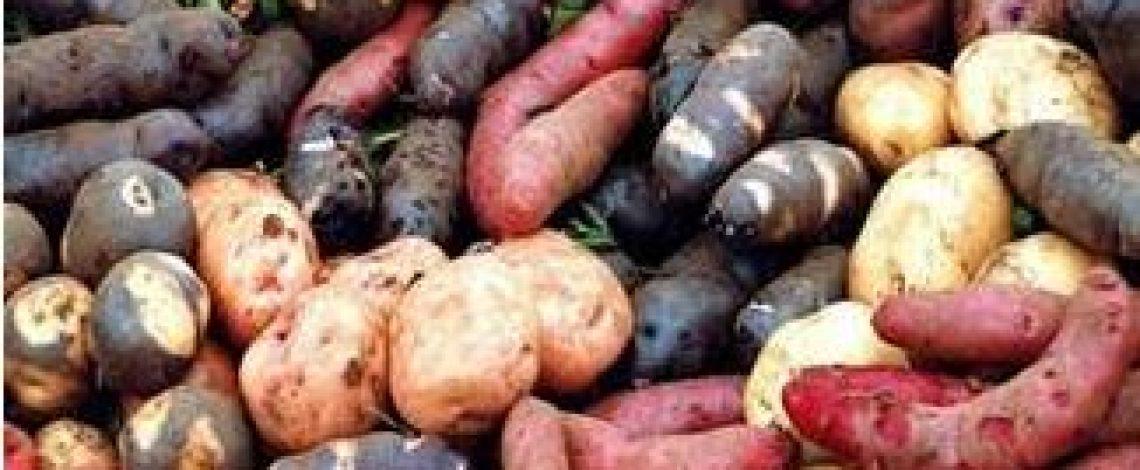 Reconocimiento de Chiloé como un sitio importante del patrimonio agrícola mundial, SIPAM