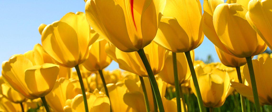 Estudio de evaluación del potencial del mercado interno de flores