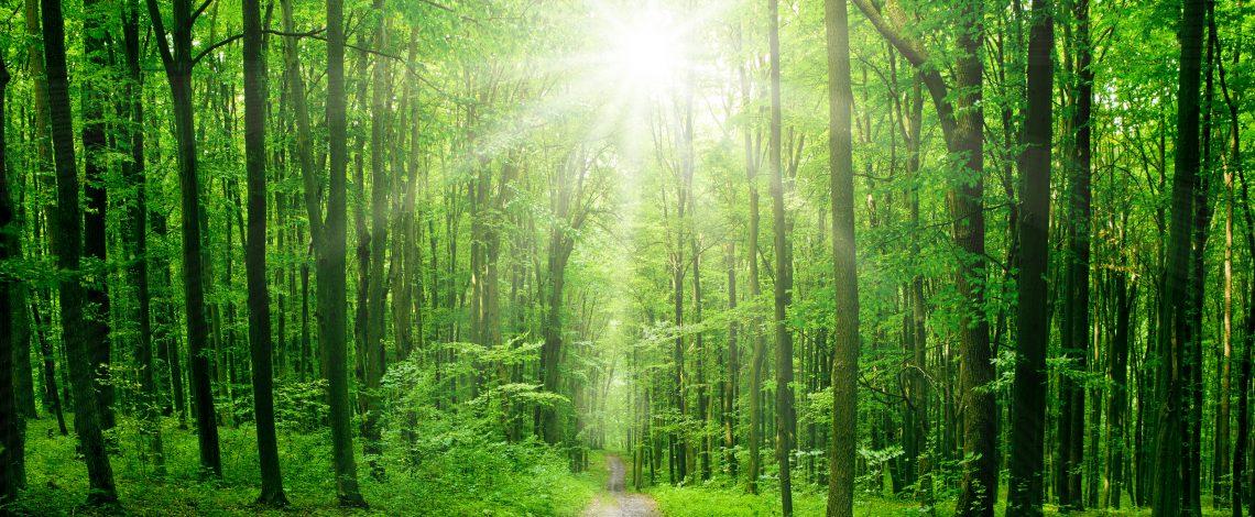 Estudio: Antecedentes para la elaboración de la normativa técnica del Bosque Nativo sobre protección de suelos, aguas y humedales