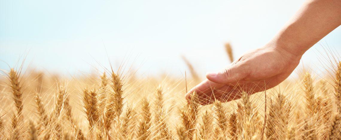 Estudio de evaluación de factibilidad técnico-económica de producción de biocombustibles líquidos en Chile