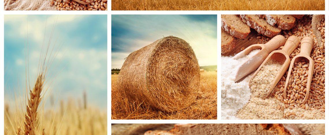 Estudio: Propuesta de instrumentos de política pública para la producción cerealera
