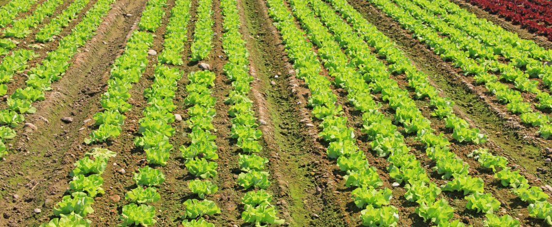 Estudio: Desarrollo itinerario técnico para las prácticas utilizadas en Sistema de Incentivos para la Sustentabilidad Agroambiental de los Suelos Agropecuarios