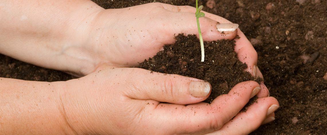 Estudio de Financiamiento Agrícola: Instrumentos disponibles, coberturas, innovaciones y desafíos pendientes