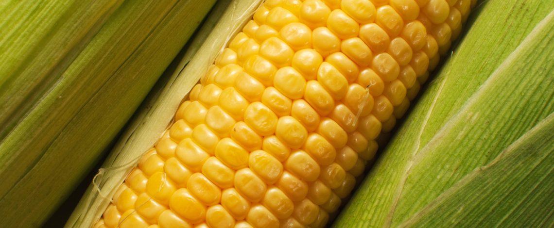 Estudio: Análisis y evaluación de la competitividad y transparencia del mercado nacional del maíz