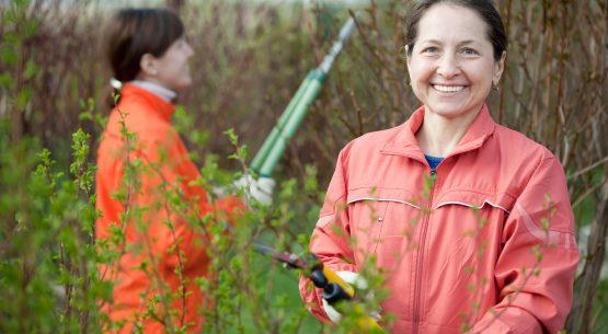 Estudio: Situación de las mujeres en el sector silvoagropecuario
