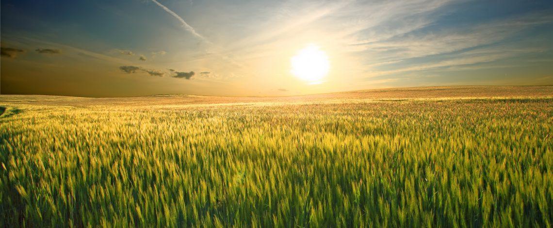 Estudio: Sistematización de las políticas y estrategias de adaptación nacional e internacional al cambio climático del sector silvoagropecuario y de los recursos hídricos y edáficos