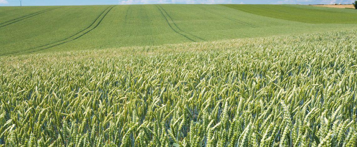 Junta Interamericana de Agricultura reeligió al Director General del IICA