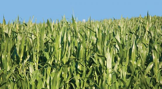 Estudio Percepción de los agentes del mercado respecto al funcionamiento de los reglamentos de transacciones comerciales vigentes para trigo, maíz y uva para vinificación y en relación con la potencial incorporación de la avena blanca