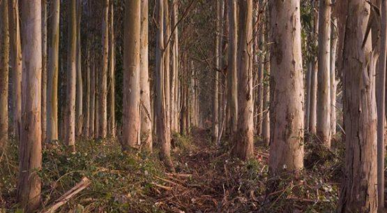 Productos forestales primarios: Comercio y dinámica