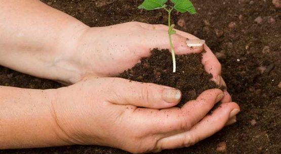Rol de la mujer en la conservación y uso sostenible de la biodiversidad agrícola