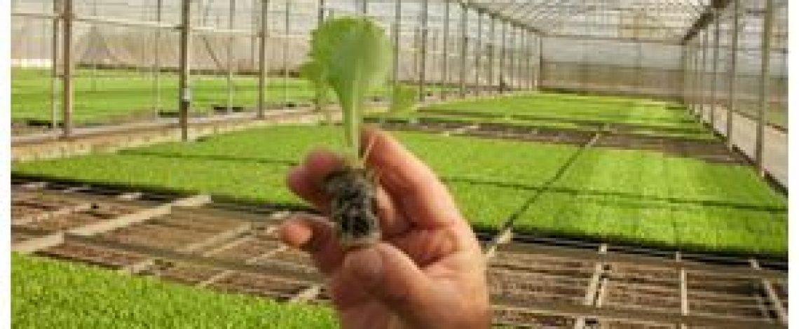 Evolución de los frutales Parte I: Viveros. Enero de 2016