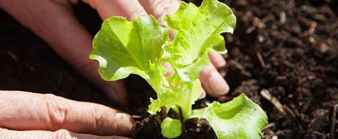 Estudio: Mercado mundial y nacional de semillas orgánicas