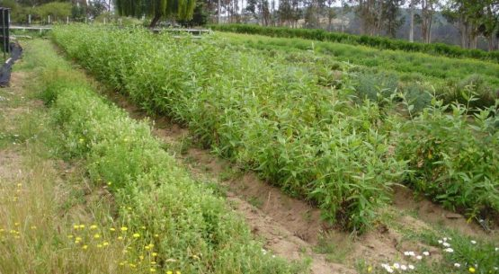 Agricultura orgánica: temporada 2011-2012