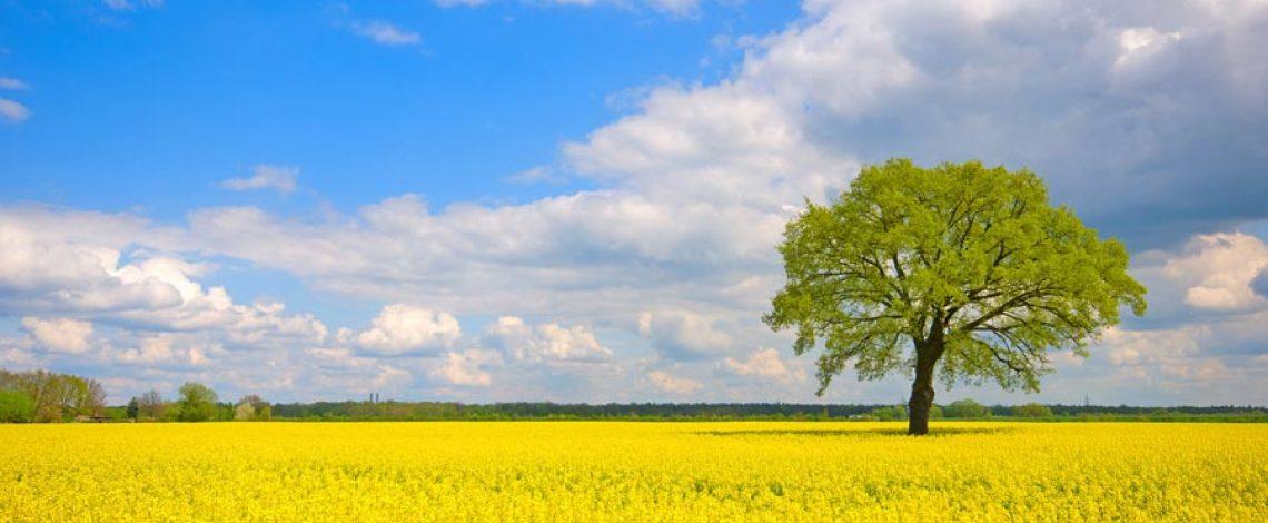 SEIA: instrumento de gestión ambiental en el sector silvoagropecuario