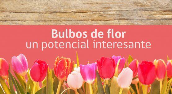 Bulbos de flor: un potencial interesante