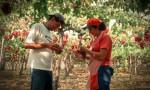 140506_evolucion_ingreso_medio_trabajadores_agricolas