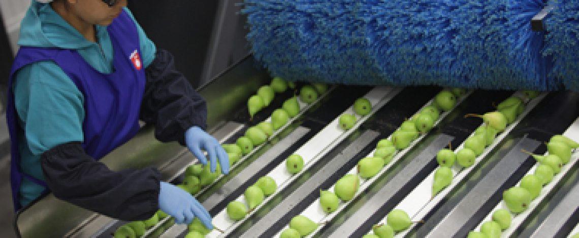 Completa información sobre el empleo agrícola en Chile disponible en Odepa