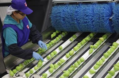 Empleo en la agricultura