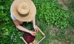 Mujer agricultora labora en el campo