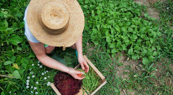 Agricultura orgánica nacional a junio de 2014