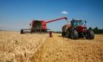 Boletín del trigo