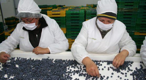 Evolución del Sistema Nacional de Certificación de Competencias Laborales en el sector agrícola, período 2000-2014. Enero de 2016