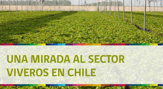 Una mirada al sector viveros en Chile. Noviembre de 2014