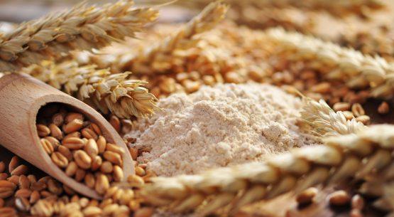 Estudio para la identificación y elaboración de estándares de calidad de harina de trigo