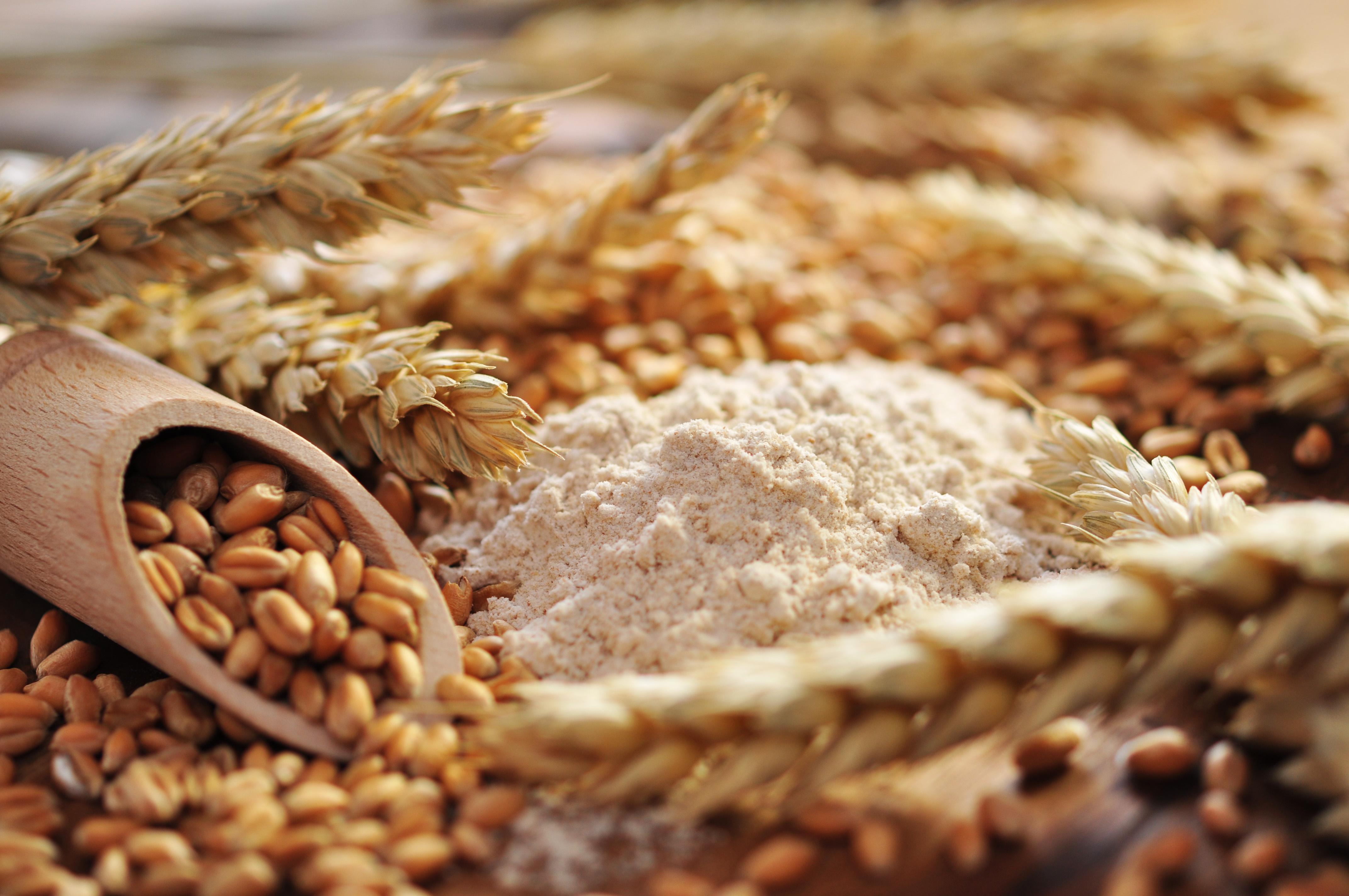 reglamento especial para el trigo en el marco de la ley n 20 656