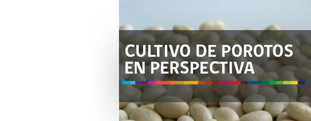 141220_CULTIVO DE POROTOS EN PERSPECTIVA_carrusel