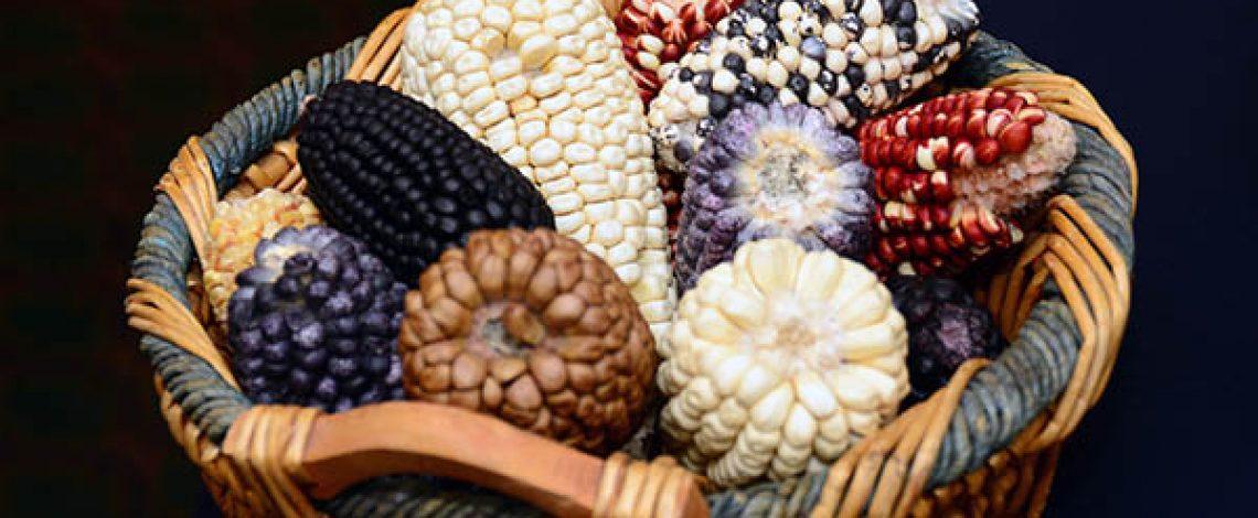 Recursos genéticos para la alimentación y la agricultura: iniciativas impulsadas por el Ministerio de Agricultura
