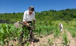 Familia Trabajando al tierra