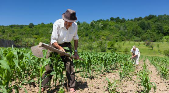 Estudio desafíos en el mercado laboral para el desarrollo de la agricultura chilena
