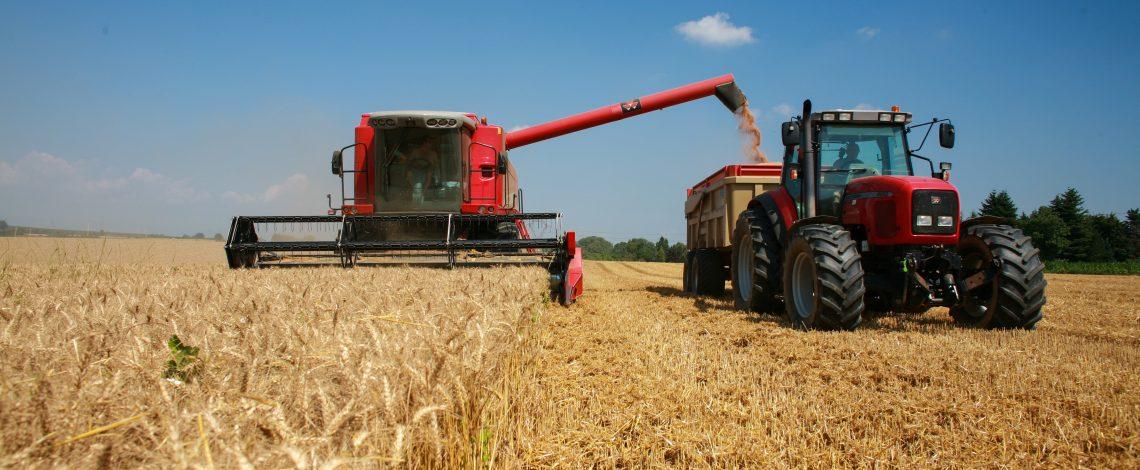 Avanza la cosecha de trigo