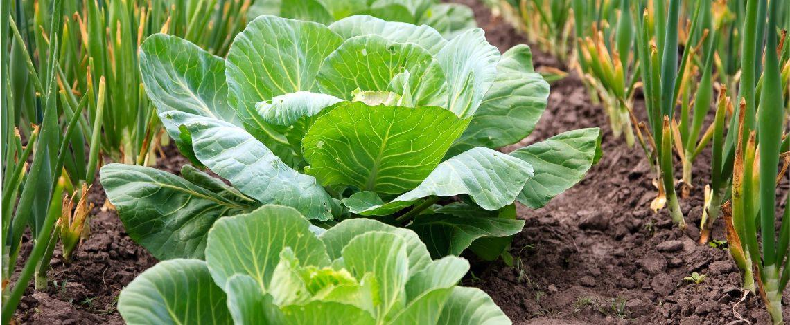 Certificación de productos orgánicos. Enero de 2015
