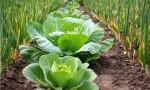 producción organica