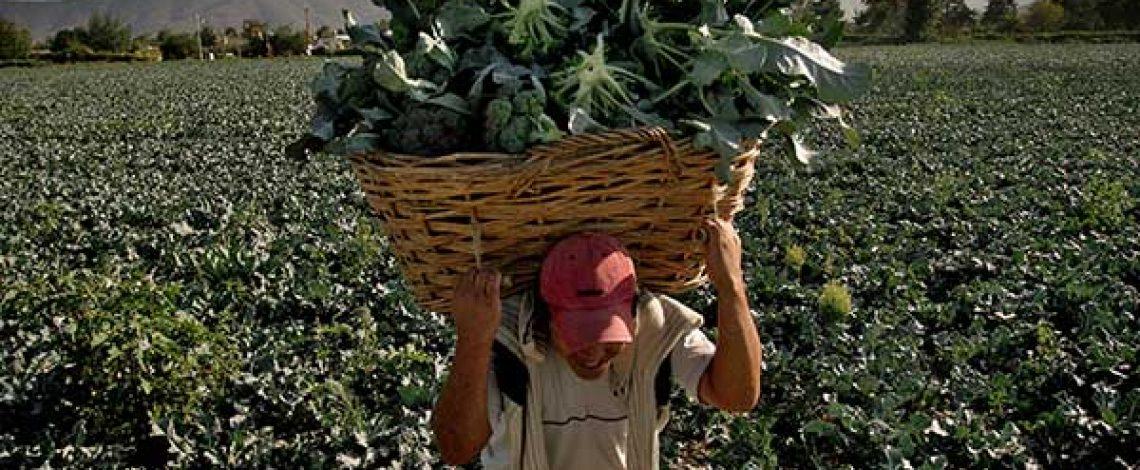 Agricultura familiar y circuitos cortos en Chile: Situación actual, restricciones y potencialidades – 2015