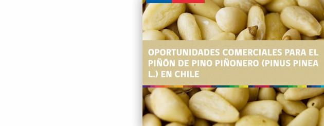 150630_Oportunidades comerciales para el Piñón de pino piñonero_carrusel