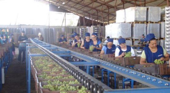 Evolución de la calidad del empleo en trabajadoras y trabajadores agrícolas. Julio de 2015