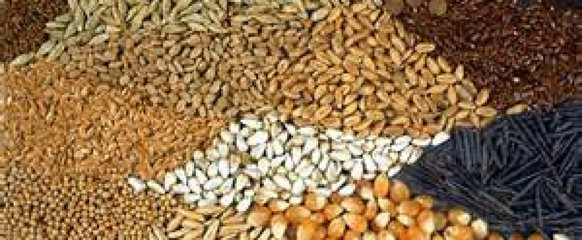 Estudio: Alternativas de protección jurídico–normativa y de otra índole para semillas y prácticas tradicionales relacionadas con la agricultura, utilizadas y mantenidas por agricultoras y agricultores de nuestro país