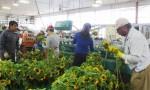 trabajador agricola2