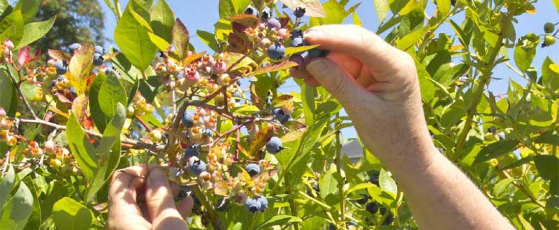 Agricultura orgánica: Temporada 2007/08