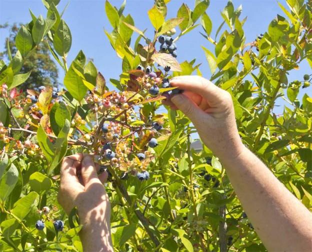 Agricultura orgánica, situación 2015