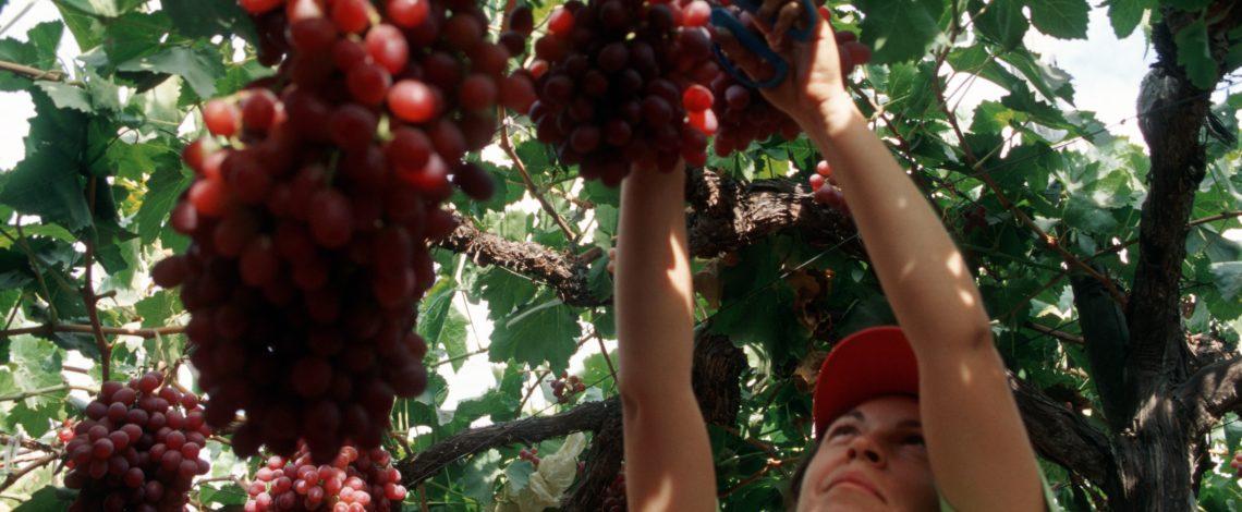 La eficiencia técnica y una aproximación a sus determinantes: una medida para mejorar la productividad en la fruticultura nacional. Octubre de 2016