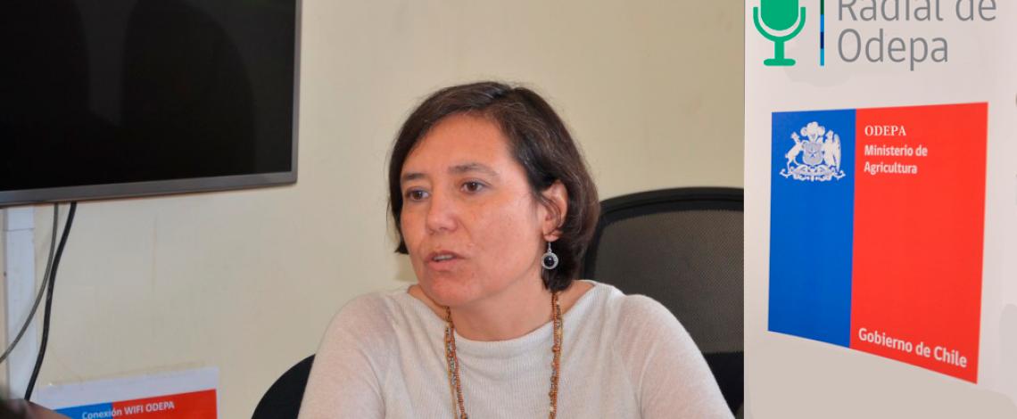 En la entrevista radial de Odepa, la directora de la institución, Claudia Carbonell, habla sobre las exportaciones de maqui